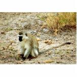 Vervet Monkey (Green) Acrylic Cut Outs