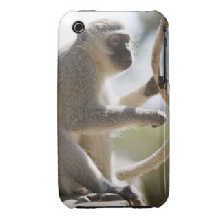 Vervet monkey holding tail iPhone 3 cases