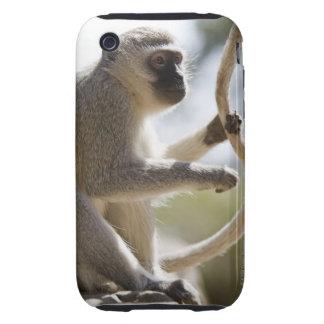 Vervet monkey holding tail tough iPhone 3 case