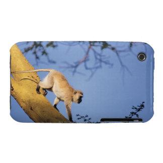 Vervet monkey on tree branch , Serengeti iPhone 3 Cover