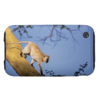 Vervet monkey on tree branch , Serengeti iPhone 3 Tough Case