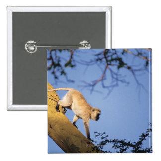 Vervet monkey on tree branch , Serengeti Pinback Button