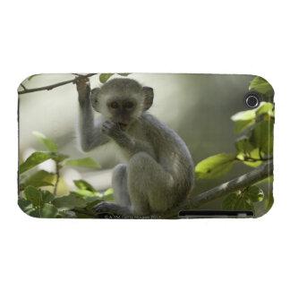 Vervet Monkey, Zimbabwe Case-Mate iPhone 3 Case