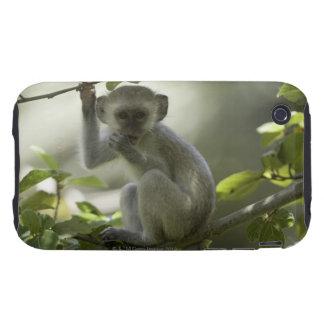 Vervet Monkey, Zimbabwe iPhone 3 Tough Cover