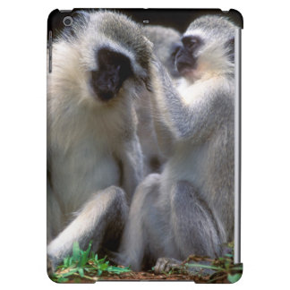 Vervet Monkey's (Cercopithecus Aethiops) iPad Air Covers
