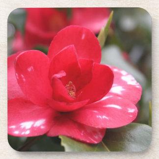 Very beautiful spring, summer pink azalea flower, coasters