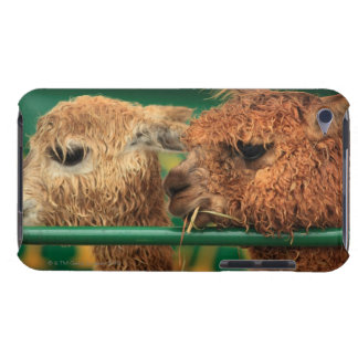 very cute lamas both looking at something off barely there iPod cases