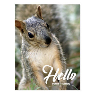 Very cute lovely squirrel hello postcard