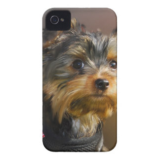 Very cute Yorky Motor products for all Case-Mate iPhone 4 Cases