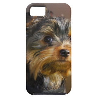 Very cute Yorky Motor products for all iPhone SE/5/5s Case