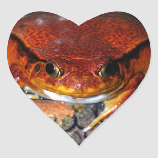 Very nice tomato frog. Frog with unusual color. Heart Sticker