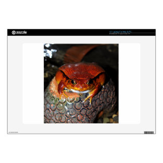 """Very nice tomato frog. Frog with unusual color. Skin For 15"""" Laptop"""