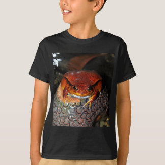 Very nice tomato frog. Frog with unusual color. T-Shirt