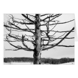 Very old tree in black and white stationery note card
