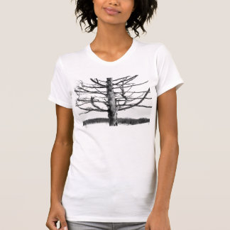 Very old tree in black and white t-shirt