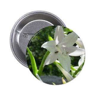 Very Pretty White Lilly Like Flower w/ a baby Bee Pinback Button