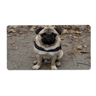 Very Serious Pug Label