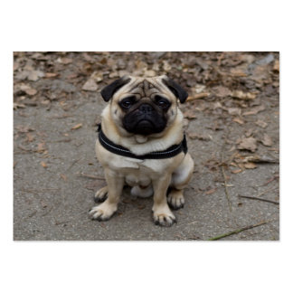 Very Serious Pug Large Business Card