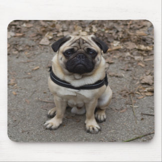 Very Serious Pug Mouse Pad