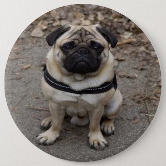 Very Serious Pug Pinback Button