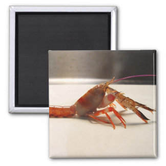 Very Small Lobster Magnet