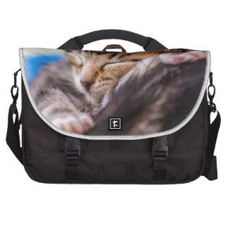 very young cat, sleeping bolsas de portatil