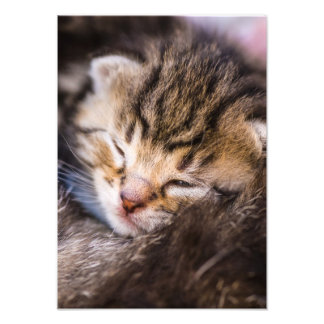 very young cat, sleeping foto