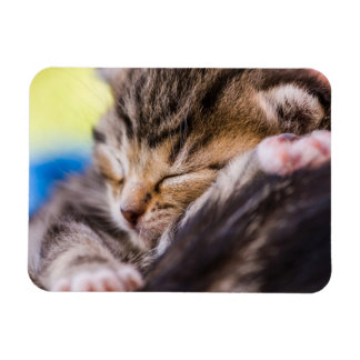 very young cat, sleeping magnets