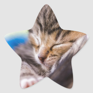 very young cat, sleeping star sticker