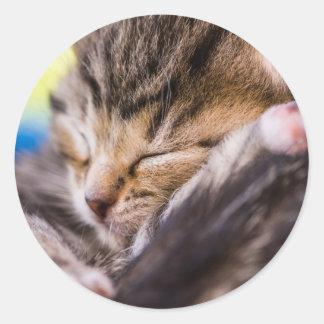 very young pegan con masilla, sleeping