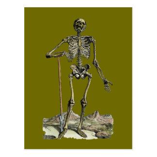 Vesalius: Skeletal System Postcard