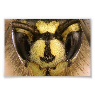 Vespula de la avispa común vulgaris fotos