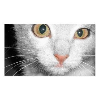 Veterinarian & Kennel Business Card - Gray Kitten