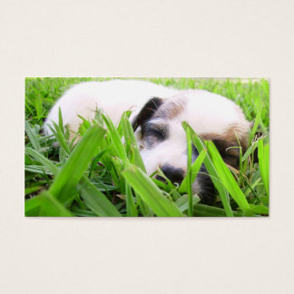 Veterinarian & Kennel Business Card - Jack Russell