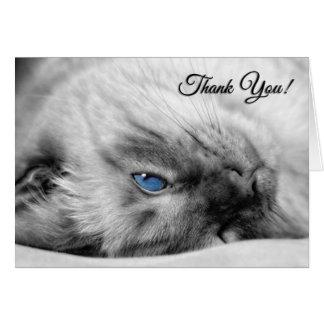 Veterinarian Thank You from the Cat Siamese Card