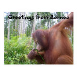 Viaje de la aventura del orangután de Borneo