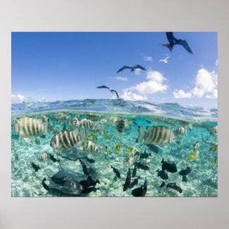 Viaje del safari de la laguna que ofrece pastinaca póster