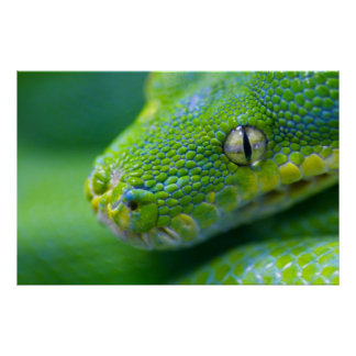 Víbora verde póster