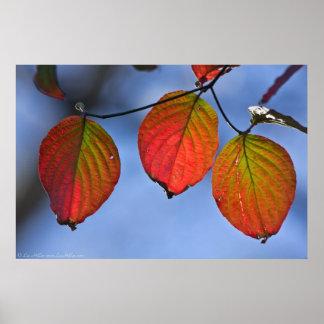 Vibrant Autumn Leaf Trio Poster