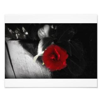 Vibrant bloom photo print