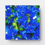 Vibrant Blue Bougainvillea Flowers Plaque