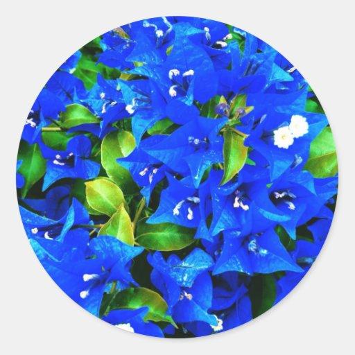 Vibrant Blue Bougainvillea Flowers Classic Round Sticker ...