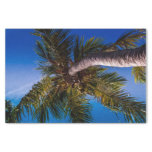Vibrant Blue Sky Tropical Palm Tree Tissue Paper