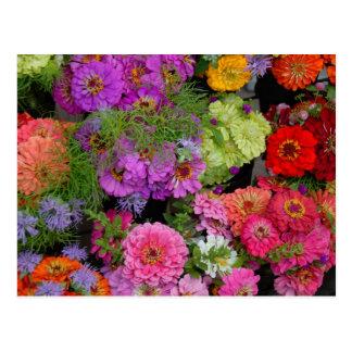 vibrant color daisies postcard