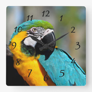 Vibrant color Macaw Square Wall Clock
