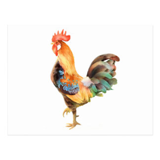 Vibrant colored Rooster Postcard