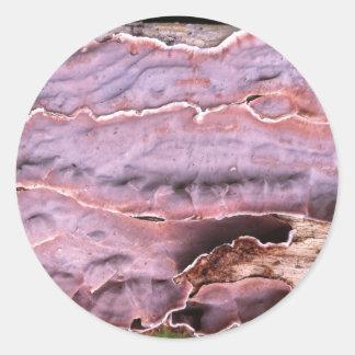 Vibrant coloured lichen growing on fallen tree classic round sticker