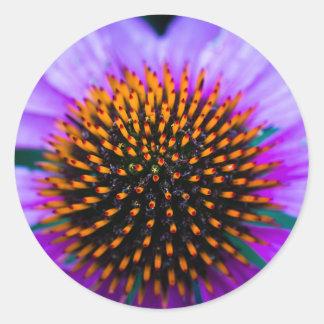 Vibrant Coneflower Classic Round Sticker