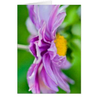 """Vibrant Cosmos Flower"" Card"