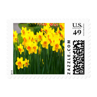 Vibrant Daffodil Small Postage Stamp